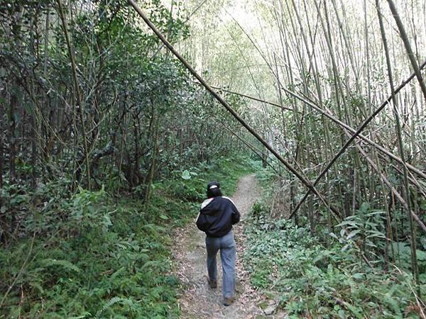 滿月元國家森林遊樂區.滿月圓山 162