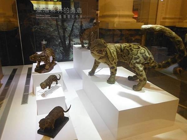 集荷平價牛排.台博館台灣雲豹特展 059