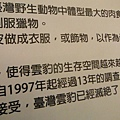 集荷平價牛排.台博館台灣雲豹特展 072