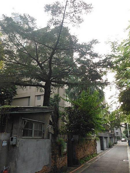 總督府山林課宿舍群 014