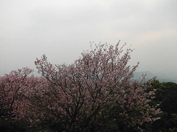 林子口山.東方寺吉野櫻.蔡博士的家.小草山.小草山圖跟點 051