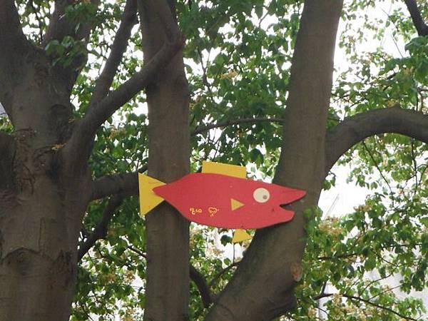 溫州公園台電加羅林魚木 008