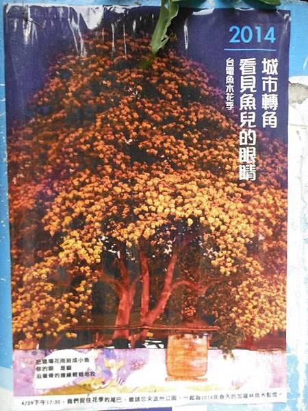 溫州公園台電加羅林魚木 020