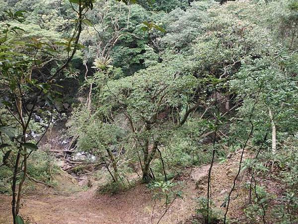 組合山.雲森瀑布.阿涵 098