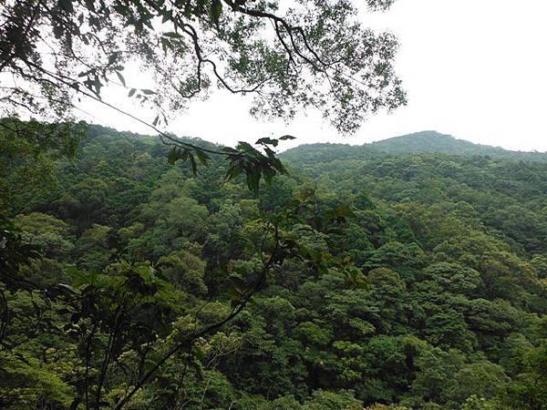組合山.雲森瀑布.阿涵 099