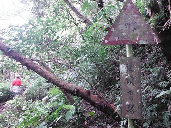 西坑林道 059