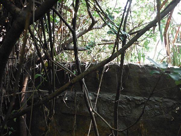 麟山鼻步道.下員坑山.青山瀑布 118