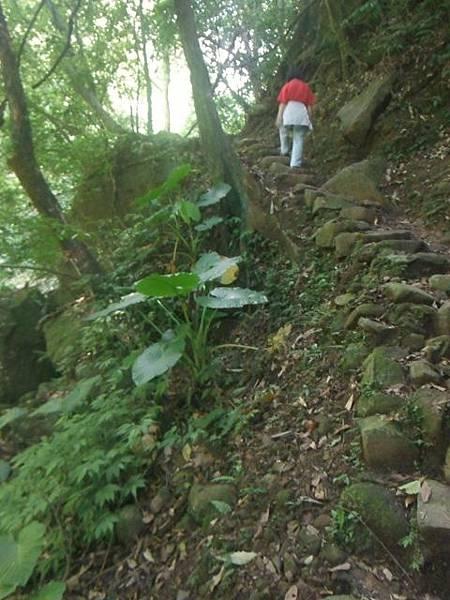 麟山鼻步道.下員坑山.青山瀑布 152