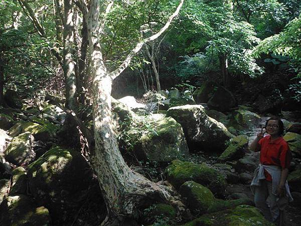 麟山鼻步道.下員坑山.青山瀑布 154