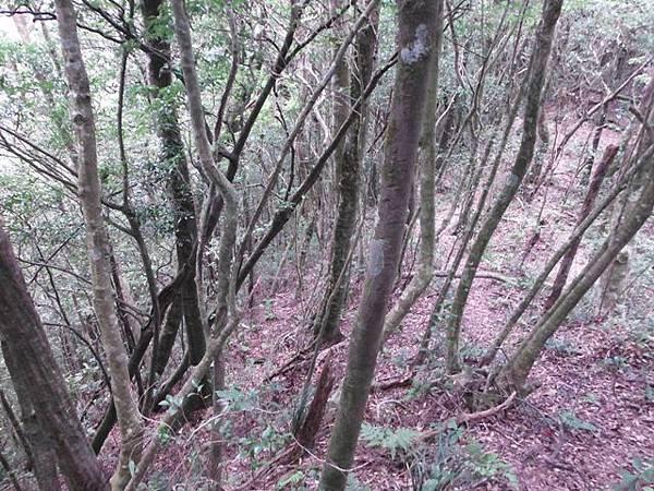 波露池.波露山.哈盆古道 157