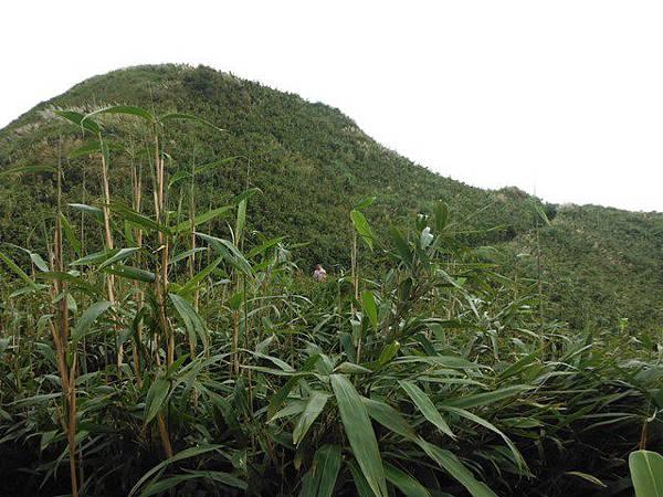 七星山.恐龍接吻石.凱達格蘭山.七星山南峰 027