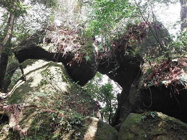 七星山.恐龍接吻石.凱達格蘭山.七星山南峰 063
