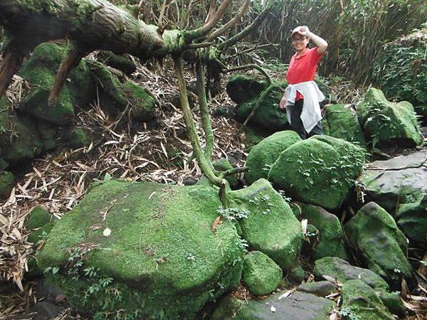 七星山.恐龍接吻石.凱達格蘭山.七星山南峰 065
