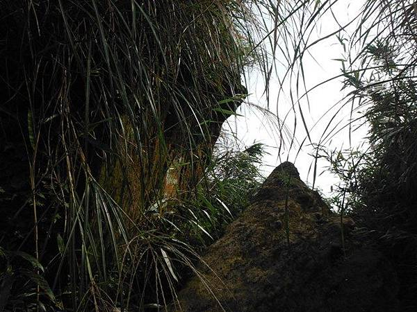 七星山.恐龍接吻石.凱達格蘭山.七星山南峰 069
