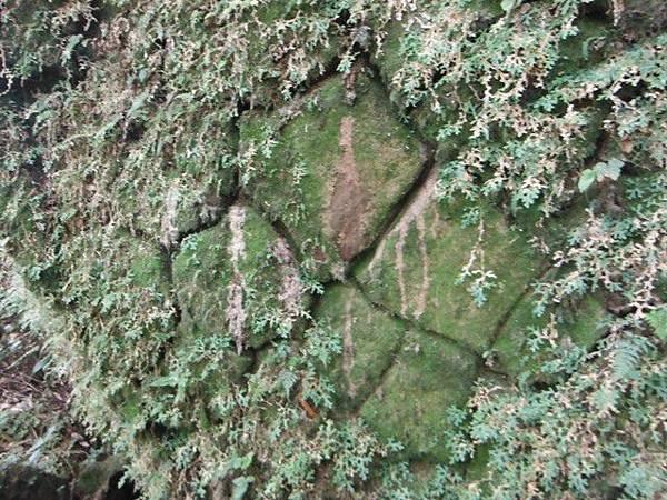 七星山.恐龍接吻石.凱達格蘭山.七星山南峰 090