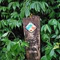桶后林道.大礁溪山 057