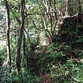 桶后林道.大礁溪山 073
