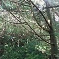 桶后林道.大礁溪山 080