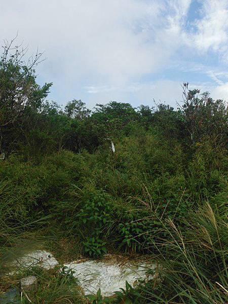 桶后林道.大礁溪山 109