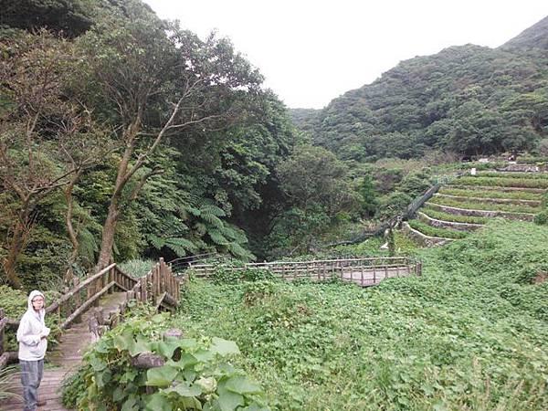 青楓步道.中正山 009