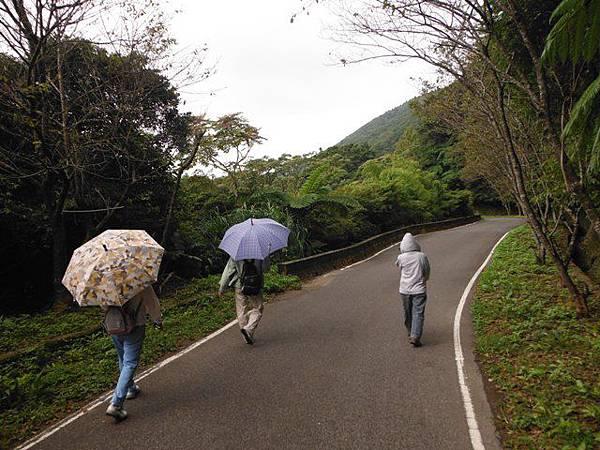 青楓步道.中正山 040