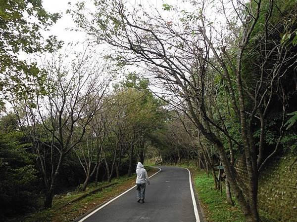 青楓步道.中正山 044