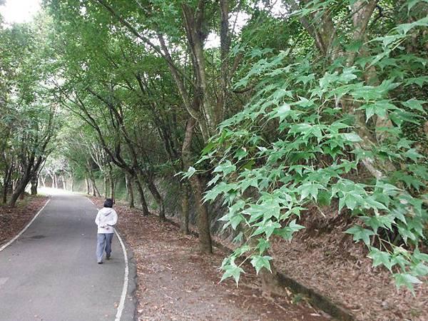 青楓步道.中正山 047