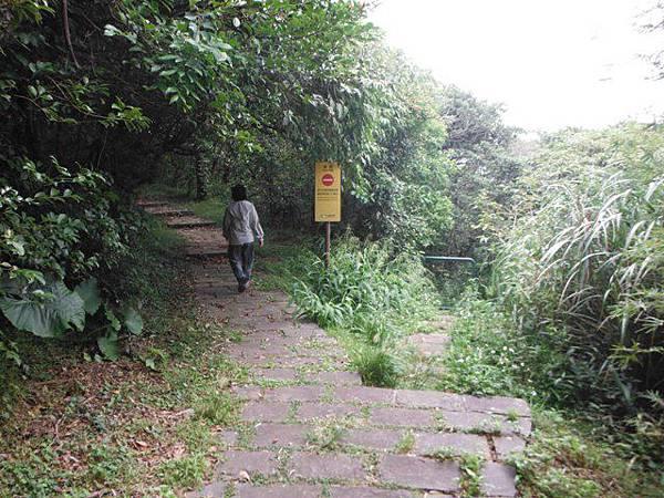 青楓步道.中正山 101