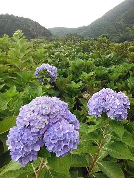 青楓步道.中正山 139
