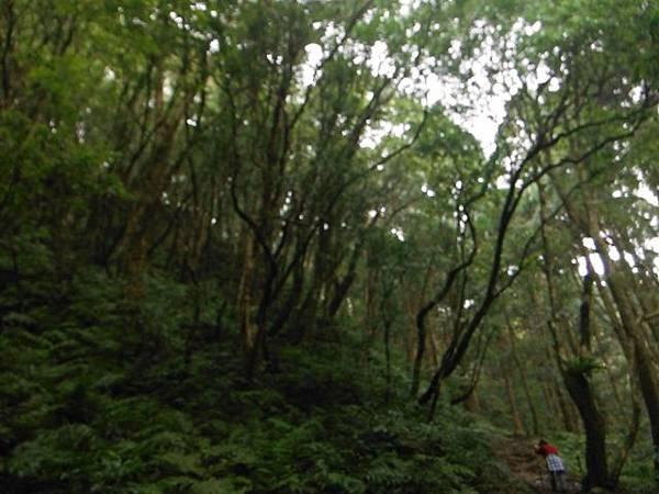 東滿步道.拉卡山 038