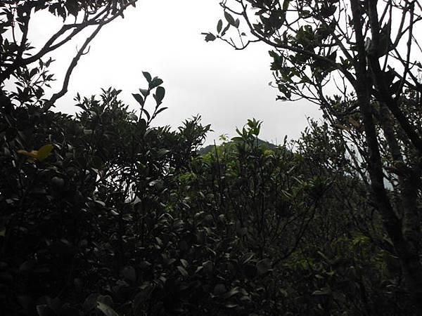 東滿步道.拉卡山 056