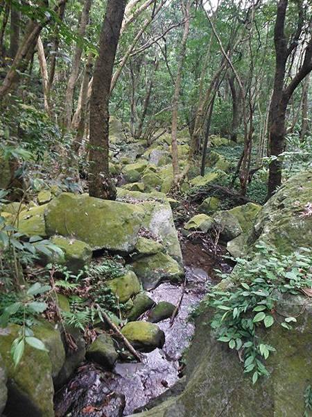 阿里磅瀑布.竹子山古道 062