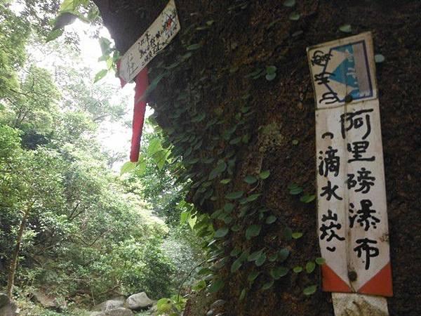 阿里磅瀑布.竹子山古道 064