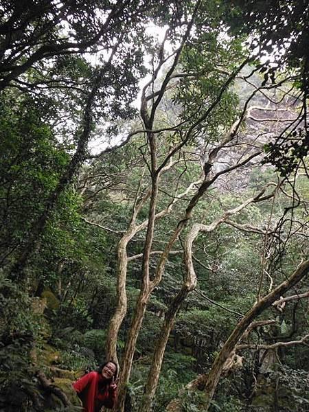 阿里磅瀑布.竹子山古道 082