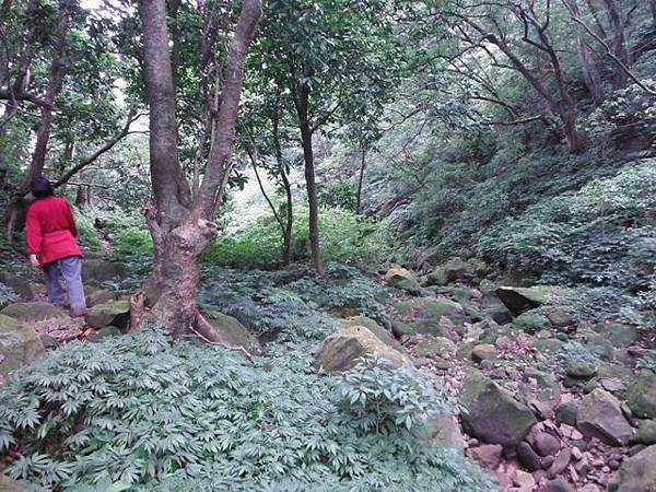 阿里磅瀑布.竹子山古道 097