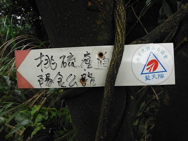 魚路古道秋芒.大油坑山 086