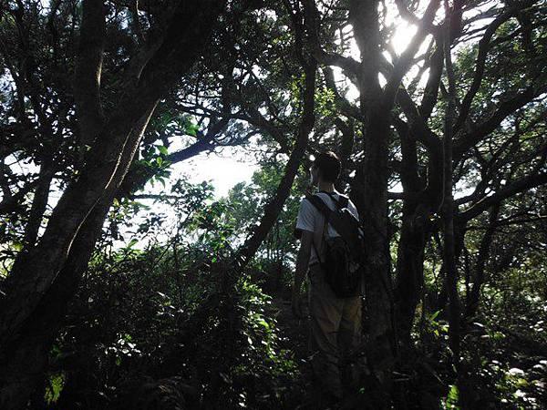小觀音山西峰火山口.大屯自然公園.百啦卡山.大屯山夕陽、雲海、秋芒 087.JPG