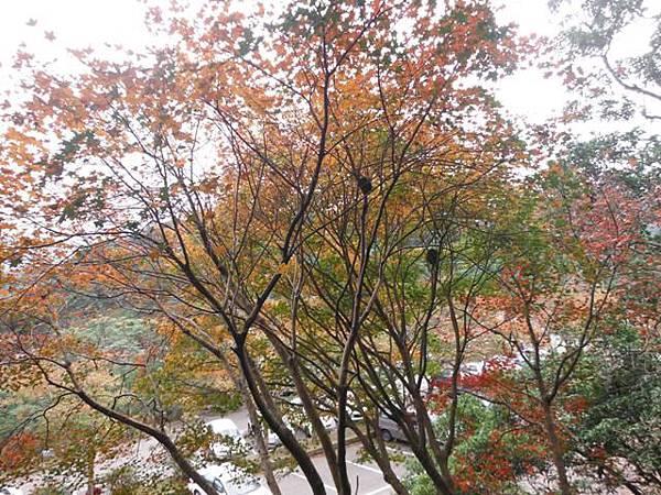 拱北殿賞楓.三秀山 022