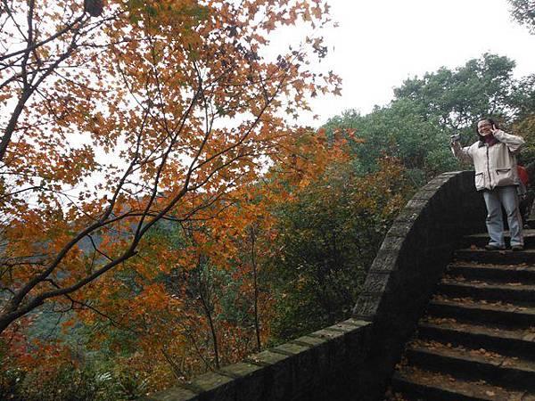 拱北殿賞楓.三秀山 065