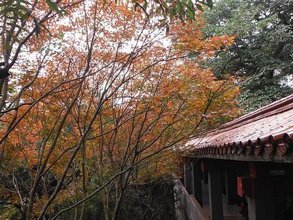 拱北殿賞楓.三秀山 077