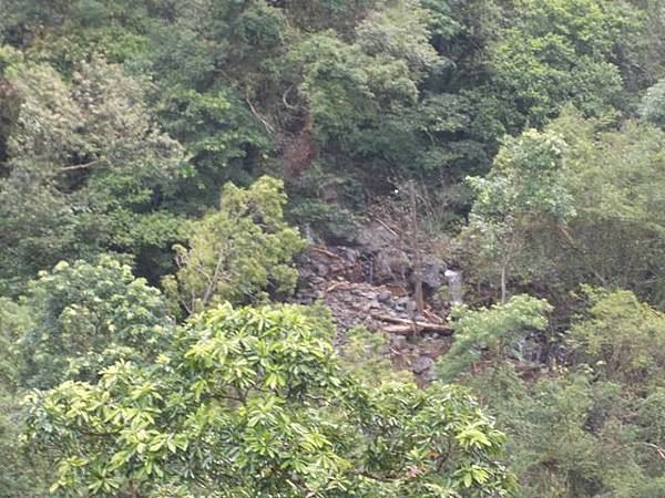 風災後烏來紅河谷2015 105