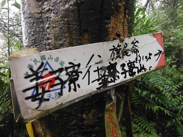 中正紀念堂賞櫻.陽明山賞櫻.旗尾崙山 094.JPG