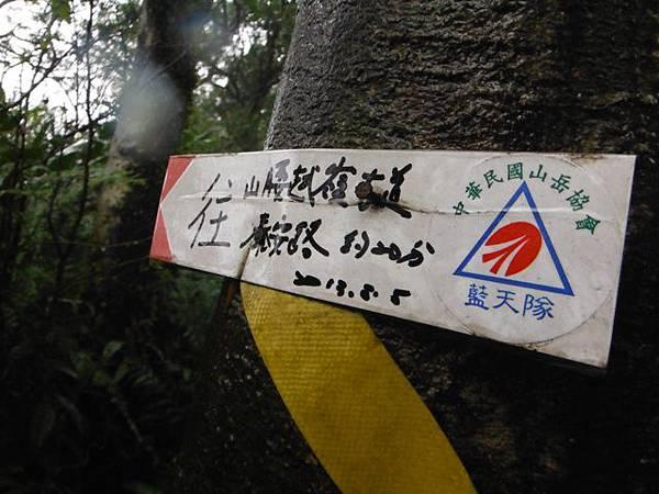 中正紀念堂賞櫻.陽明山賞櫻.旗尾崙山 095.JPG