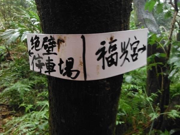 中正紀念堂賞櫻.陽明山賞櫻.旗尾崙山 112.JPG