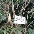 2019.12.08燕溪古道. 市96 (24).jpg