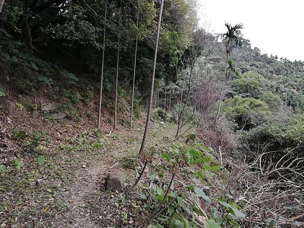 2019.12.19.牛埔尾山 (143).jpg