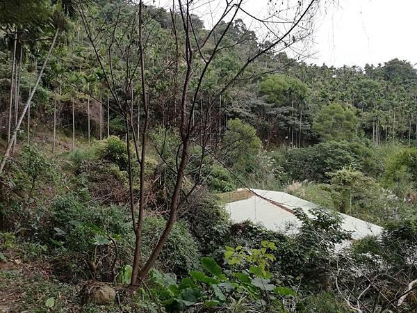 2019.12.19.牛埔尾山 (136).jpg