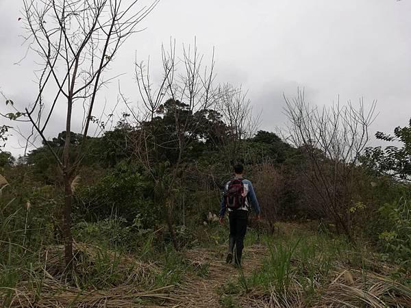 2019.12.19.牛埔尾山 (131).jpg