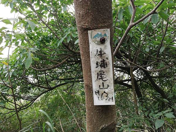 2019.12.19.牛埔尾山 (89).jpg