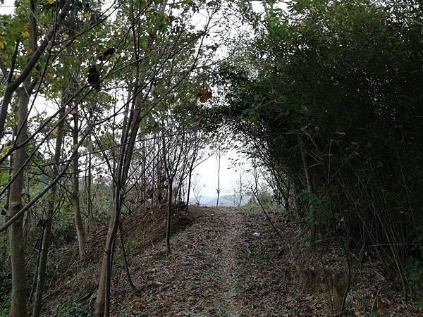 2019.12.19.牛埔尾山 (110).jpg